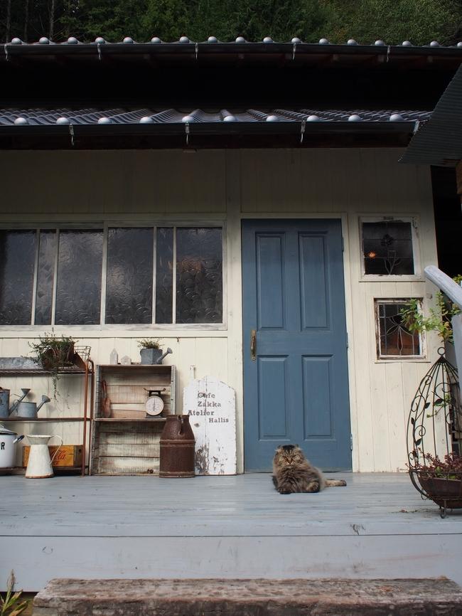 ハリスカフェの入口にいる猫
