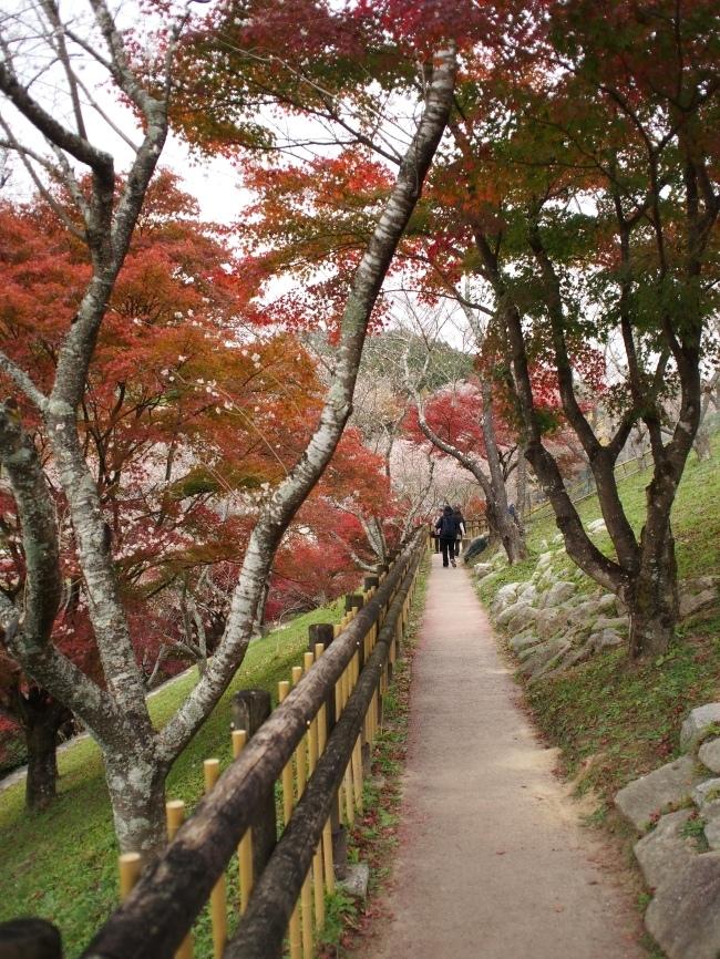 小原四季桜まつり1 小原ふれあい公園