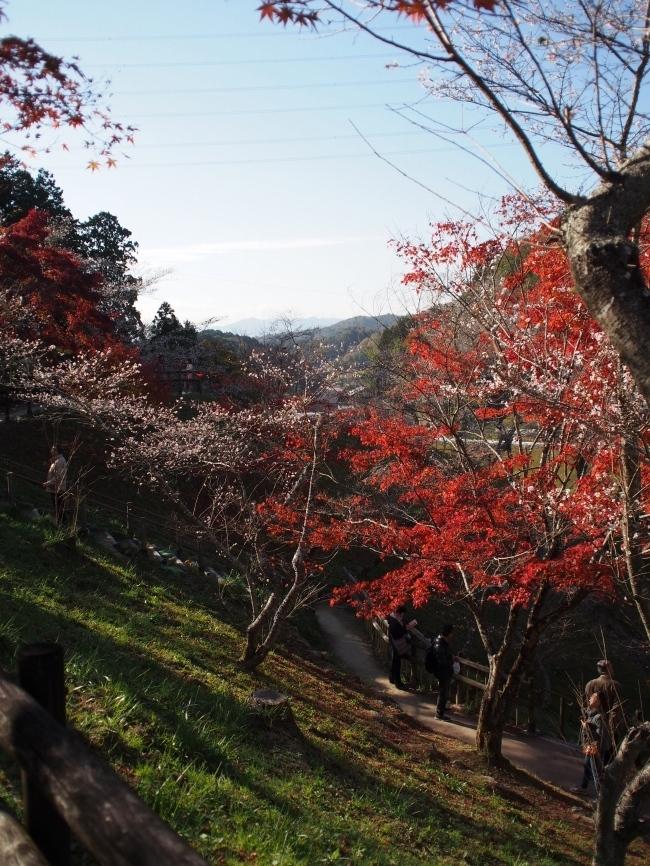 小原四季桜まつり3