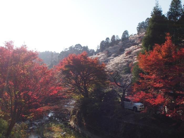 川見四季桜の里2