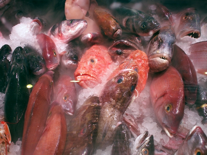 スーパーマーケットの魚
