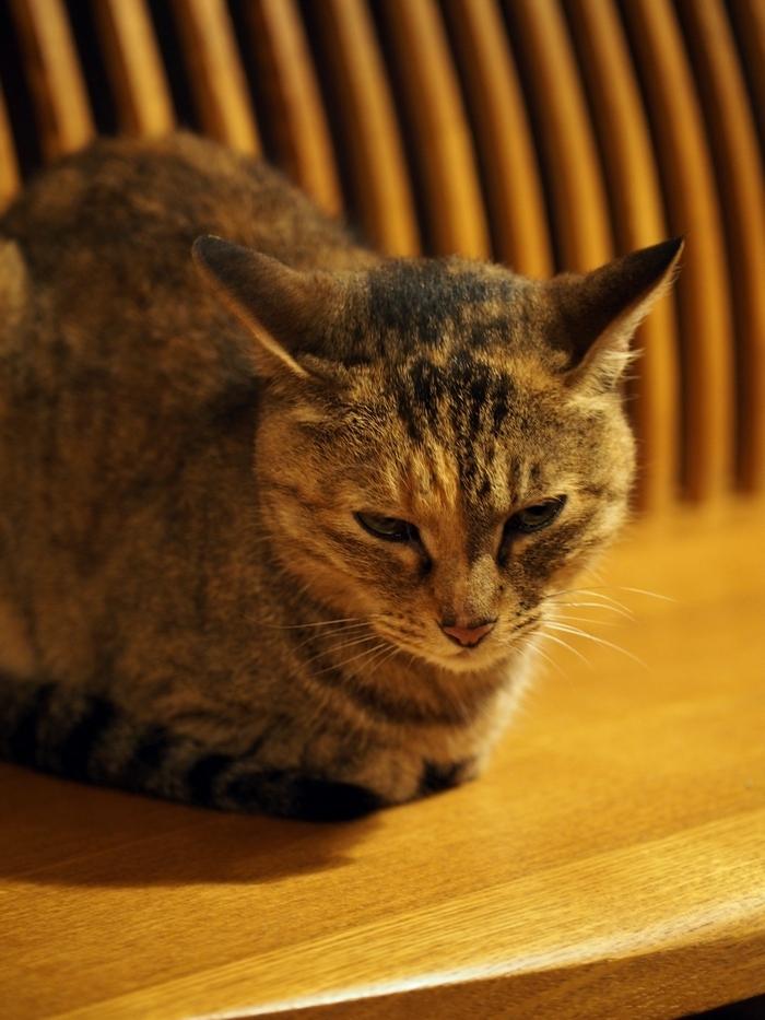 鹿教湯温泉三水館の猫 ミーちゃん