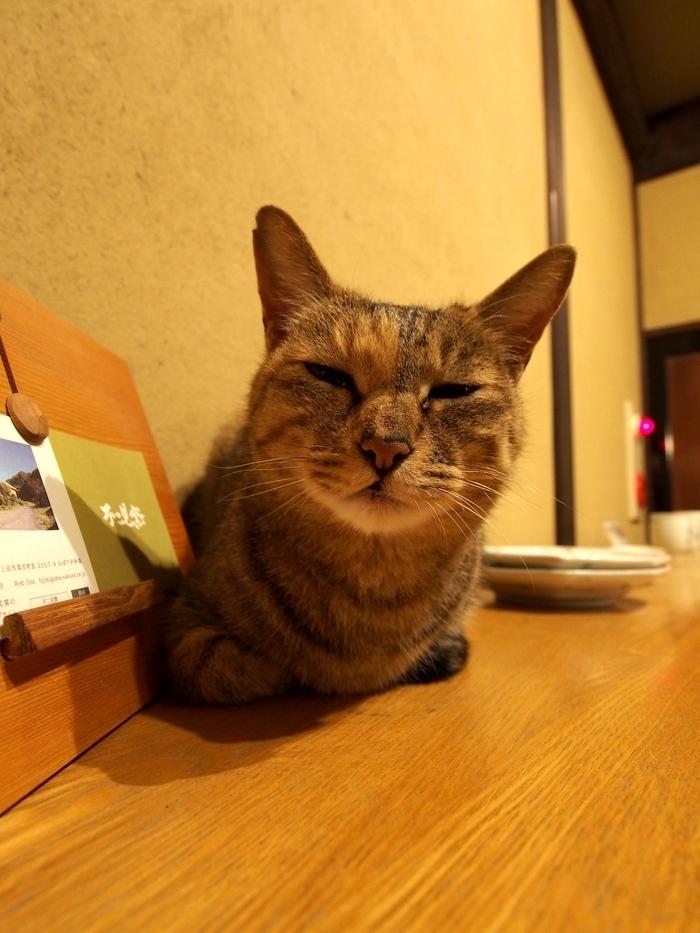 鹿教湯温泉三水館の猫 ミーちゃん その2